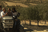 The Olive Route : Olive Oil, the Mafia and the New Sicily
